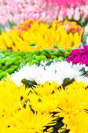 Colorful background of vivid flowers in a bloom