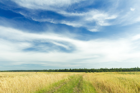 cirrus clouds: Cirrus clouds on azure sky above green rye field and dirt road Stock Photo