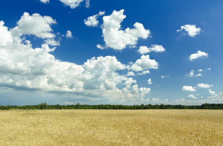 industry moody: White fluffy clouds and deep blue sky above ripening yellow green grain farm field Stock Photo