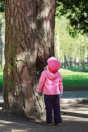 Toddler girl is looking high up to big old pine tree with huge trunk photo