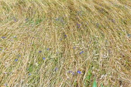 textura: Background of floral farm field land covering view from above