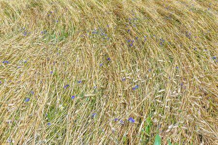 textura: Sfondo di fattoria campo floreale vista copertura terreno dall'alto