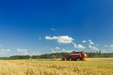Several combine harvesters are working on oats farm field under blue sky during hot summer day