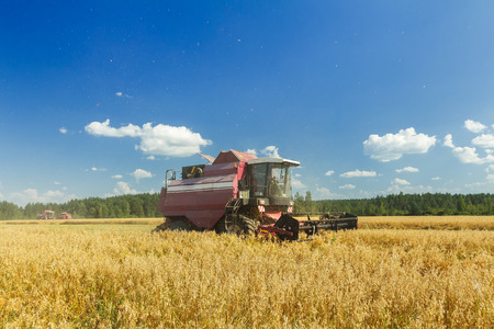 threshing: Modern combine harvester is working on oats farm field under blue sky in hot summer day Stock Photo