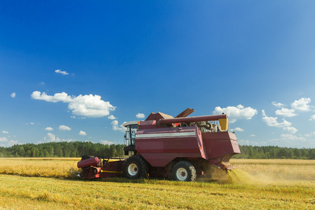 winnowing: Farm combine harvester with elevator to upload cereal into the trailer Stock Photo