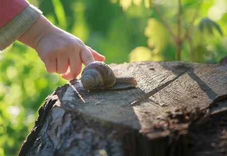 Preschooler child arm is touching crawling on tree stump edible snail Archivio Fotografico