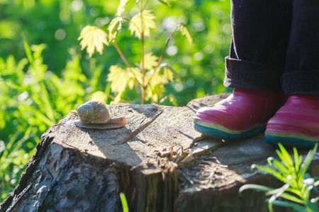 gum boots: Preschooler feet in red gum boots are standing on tree stump near creeping edible snail Stock Photo