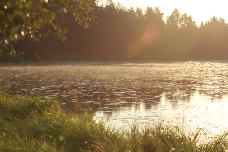 carex: Sunup under early morning pine forest lake with sun flares