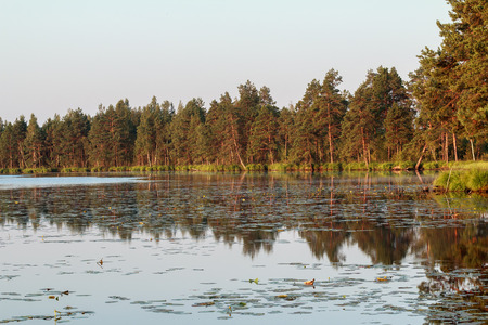 sunup: Pine trees water reflection during golden scarlet sunrise on big forest lake