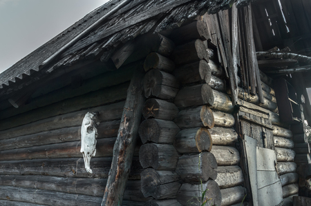 abandoned house: Old rustic wooden log haunted house with horse skull on gray wall