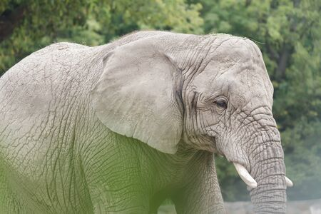 アフリカ象やアフリカゾウは世界で最大の陸上動物です。