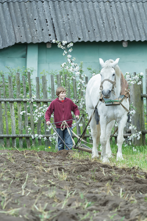 draught: Teenage farm worker and draught white horse during traditional single-sided ploughing
