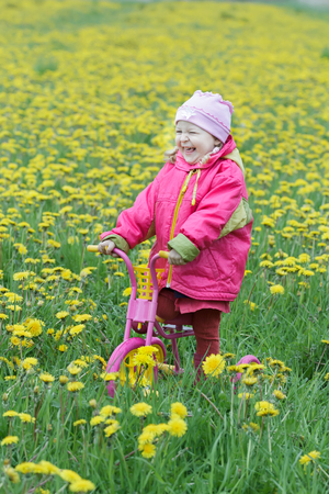 fuchsia color: Laughing toddler girl is standing at spring flowering dandelions meadow on kids pink and yellow tricycle Stock Photo