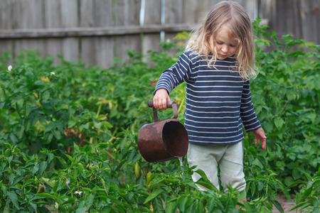 three years old: Three years old girl is watering vegetable plants in green summer garden