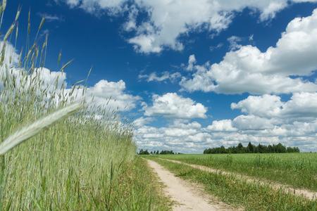 ultramarine blue: Summer rye farm field under white cirrus clouds and clear blue bright sky Stock Photo