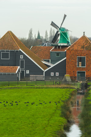netherlandish: Country landscape with grazing coot bird flock at traditional Dutch windmill and wooden farm house background
