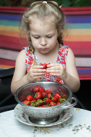 Portrait of little girl is eating ripe red strawberry fruits from colander