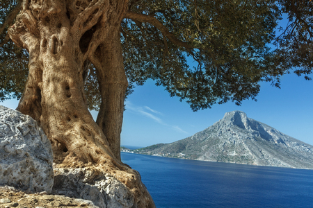 South European landscape with huge ancient olive tree and sea view on Telendos island peak
