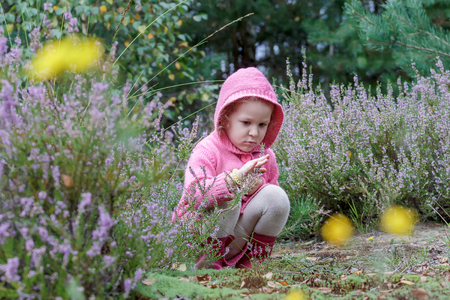 Little girl with is studying purple calluna flowers in summer forest