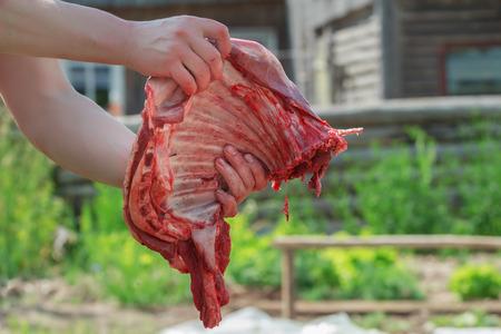 Uomo locale autonomo che macellava carcassa di pecore di fattoria Archivio Fotografico - 81704389
