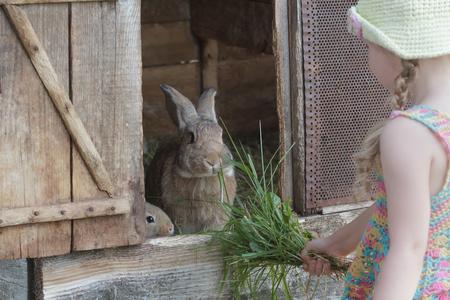 Bambina che sta davanti alla conigliera dell'azienda agricola con i conigli domestici all'aperto Archivio Fotografico - 94516840