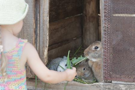 Ragazza curiosa che alimenta i conigli domestici con erba organica all'aperto Archivio Fotografico - 94451069