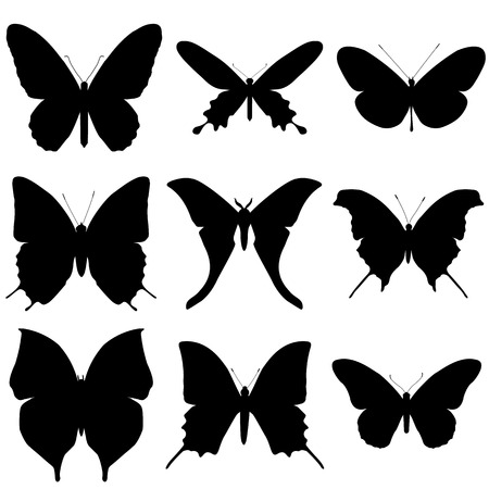 white butterfly: Butterfly silhouette set. Icon collection.