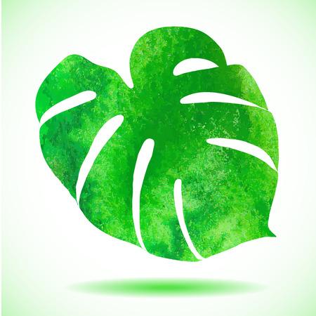 tropical plant: Hoja de la acuarela de la planta tropical - Monstera.