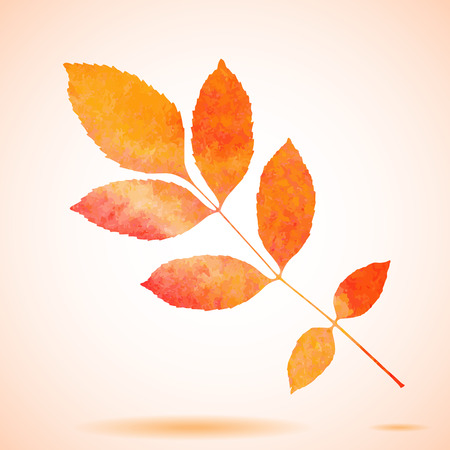 ash tree: Orange watercolor painted vector ash tree leaf Illustration