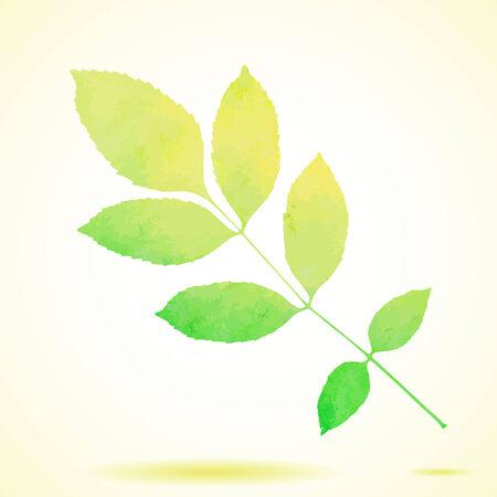folha: Aquarela pintada verde vetor folha freixo Ilustração