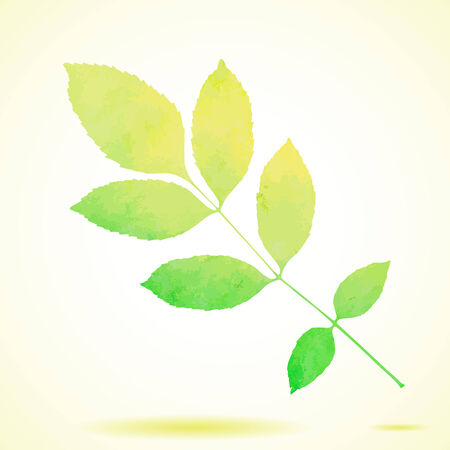 ash tree: Green watercolor painted vector ash tree leaf Illustration