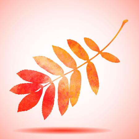 rowan tree: Orange watercolor painted vector rowan tree leaf Illustration