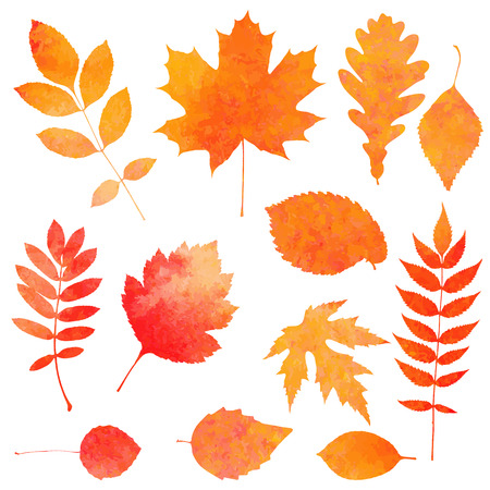 Watercolor collection of beautiful orange autumn leaves isolated on white background Vector
