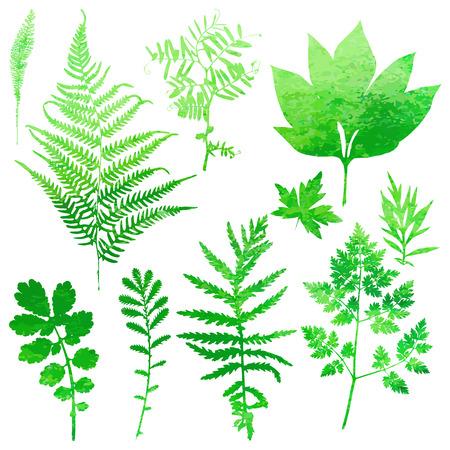 helechos: Conjunto de hojas de acuarela jardín. Ilustración del vector.