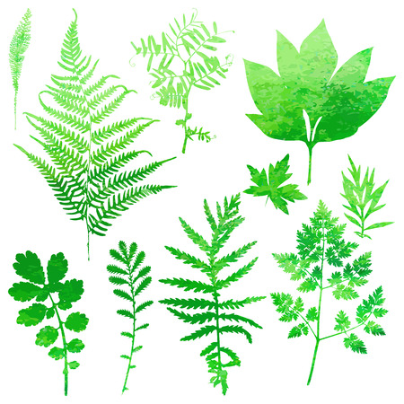 fern: Set of garden watercolor leaves. Vector illustration.