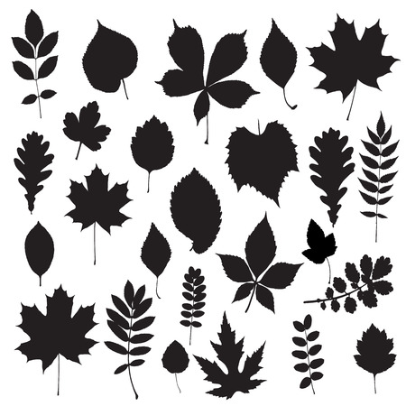 Leaf collection - vector silhouette Vector