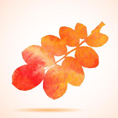 dogrose: Orange watercolor dog-rose leaf