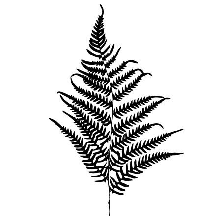 Fern silhouette. Isolated on white background Vector