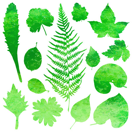 fern leaf: Set of garden watercolor leaves. Vector illustration.