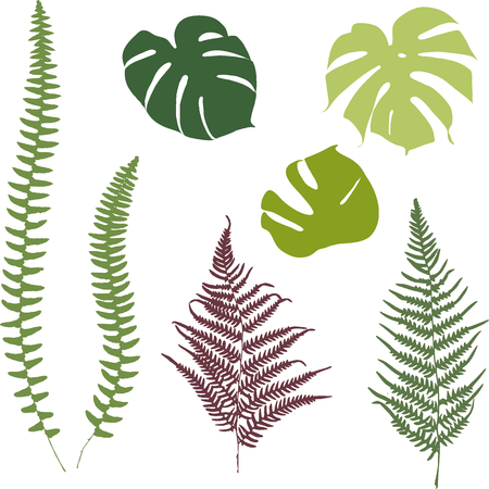 monstera: Fern and monstera silhouettes. Isolated on white background