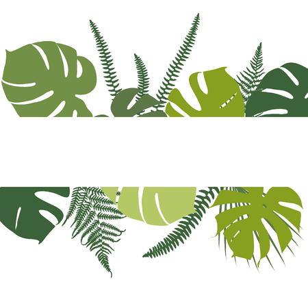 monstera: Tropical background with fern and monstera leaves