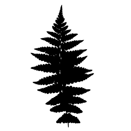 spore: Fern silhouette Illustration