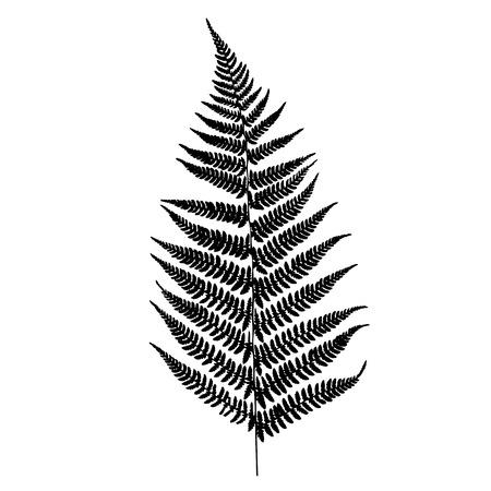 Fern silhouette  イラスト・ベクター素材