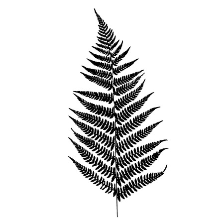 foliage frond: Fern silhouette Illustration