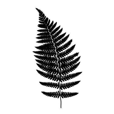 fern leaf: Fern frond black silhouette. Vector illustration. Forest concept.