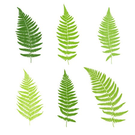 rainforest: Set of fern frond silhouettes. Vector illustration