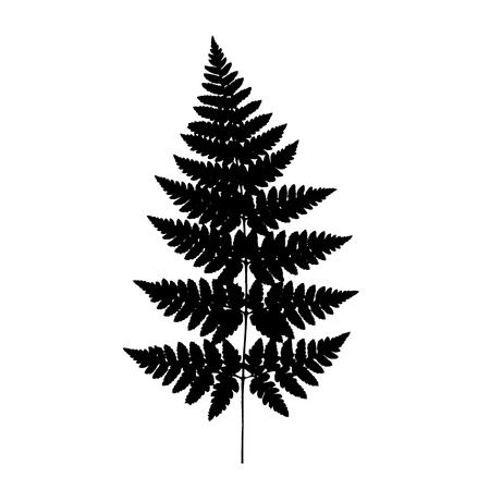 frond: Fern frond black silhouette. Vector illustration. Forest concept.