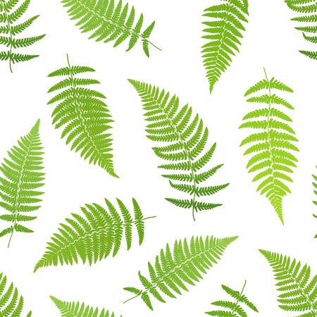 helechos: hoja de helecho patrón transparente de siluetas. ilustración vectorial