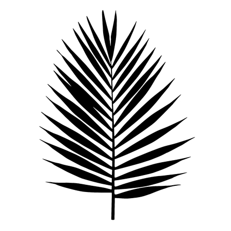 Palm leaf silhouette. Vector illustration. Tropical leaves.
