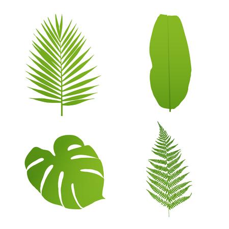 helechos: Conjunto de hojas tropicales. Palma, plátano, helecho, monstera. Ilustración del vector.